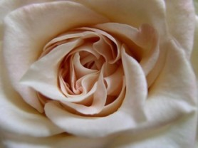 HE de rose pour le chakra du coeur