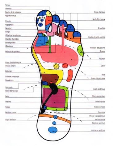 Reflexologie_pied-gauche